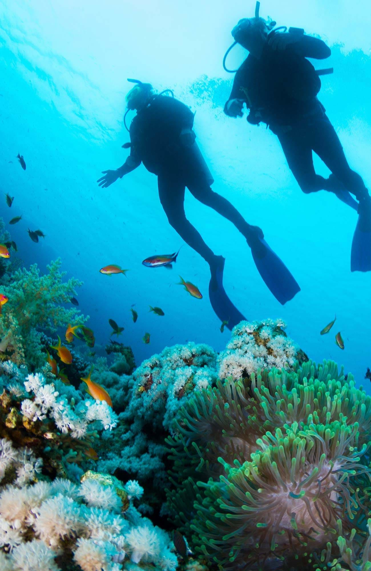 diving-general-couple-coral-sidebar
