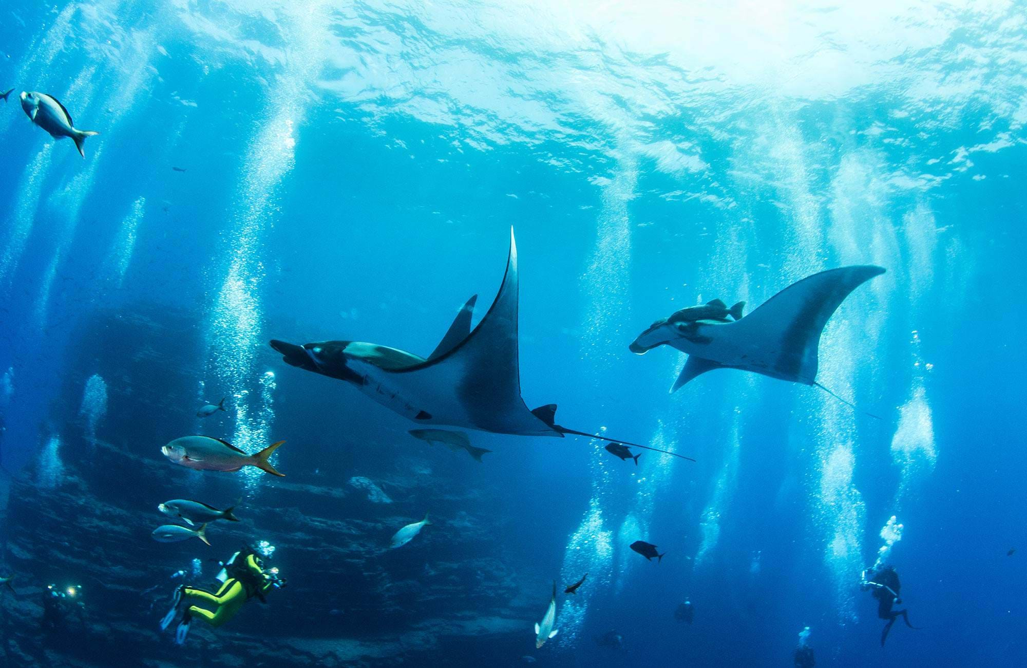 diving-manta-rays-cover