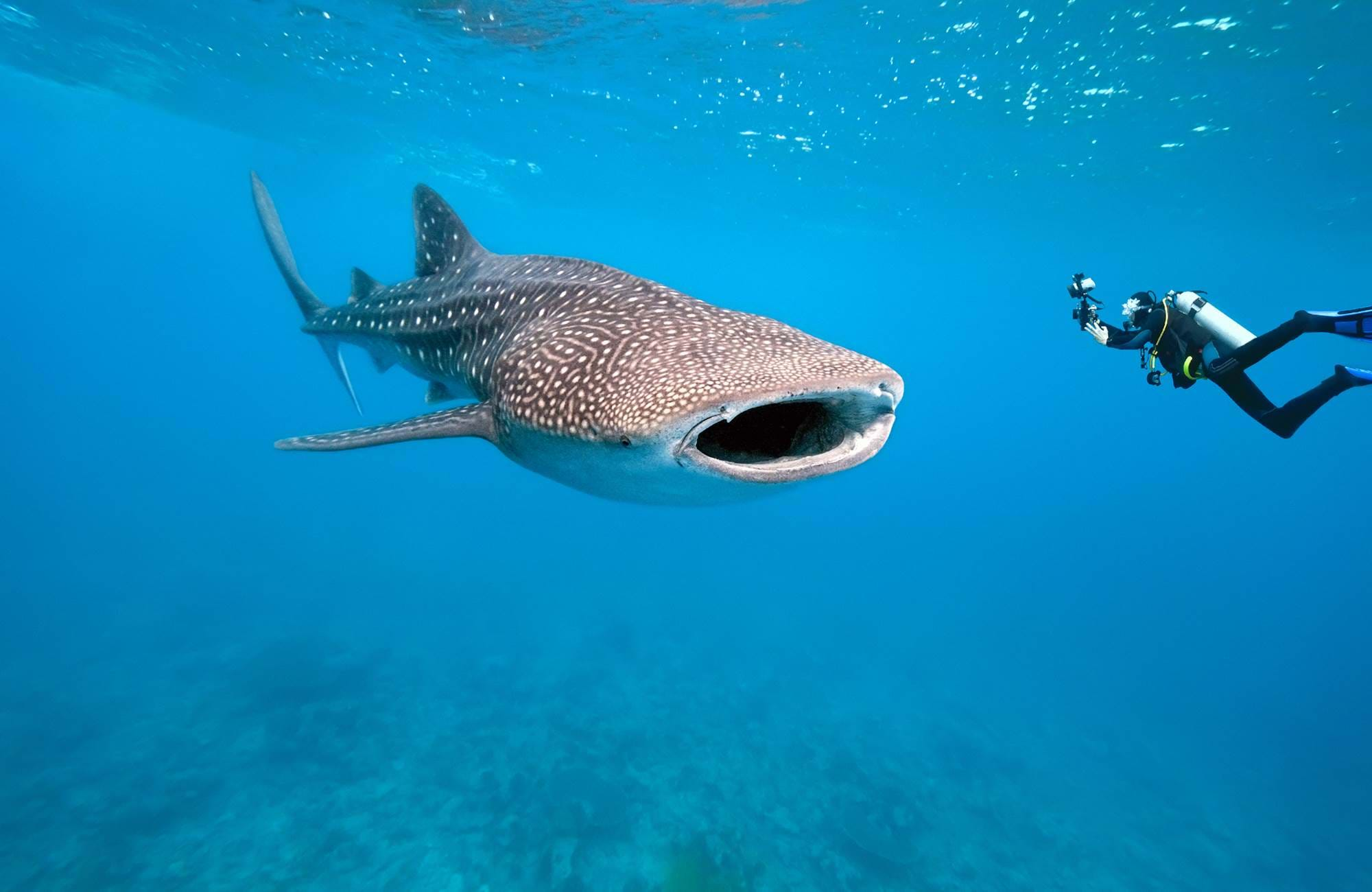 diving-whaleshark-underwater-photographer-cover