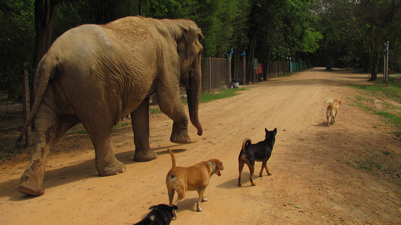 Elephant Refuge Center