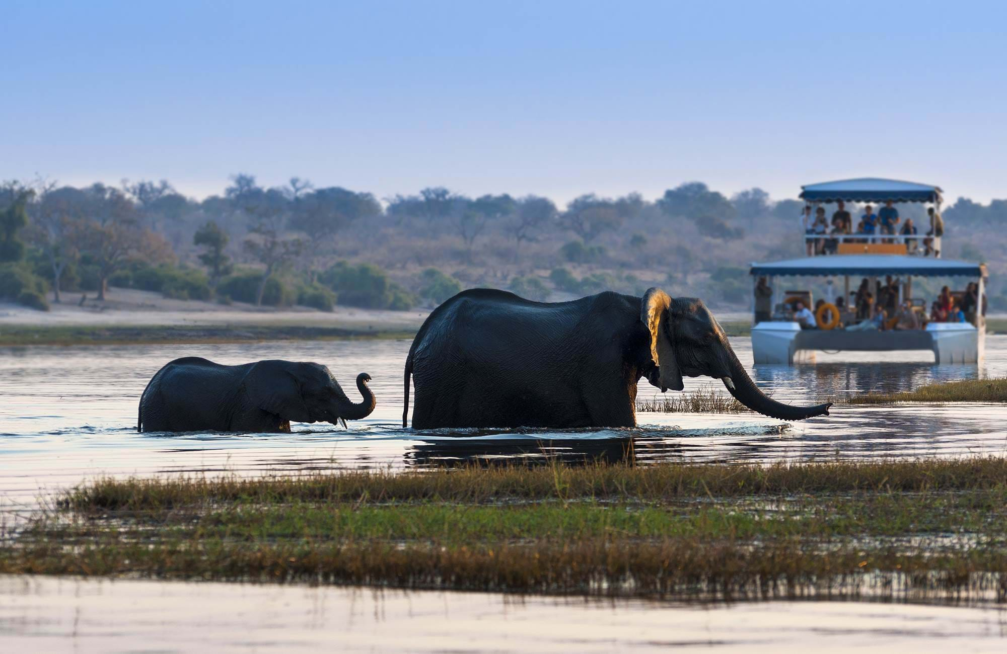 Chobe River under dina resa till Botswana | Safari i Botswana med elefanter och the big five