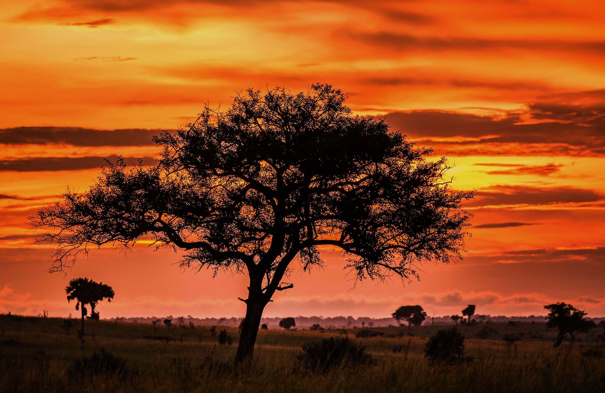 murchisons-falls-uganda-tree-sunset
