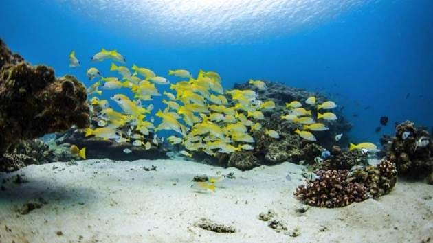 Pulau_Weh_Diving-005