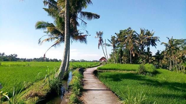 ubud_biking_moderate_trip_3hrs_-_2019_3_1280x720_for_navi_web